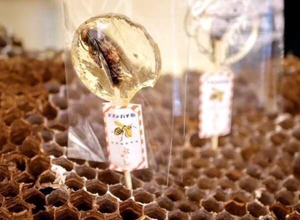 東京駅にサスティナブル&ダイバーシティフードの昆虫食が集結。