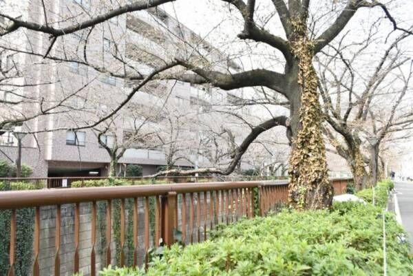目黒川沿いの〈HAUTE COUTERE CAFE〉で「お花見アフタヌーンティー」を楽しむ!