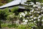 週末は子どもと一緒に鎌倉散歩。季節の花が鮮やかに咲く、人気スポット〈浄妙寺〉へ。