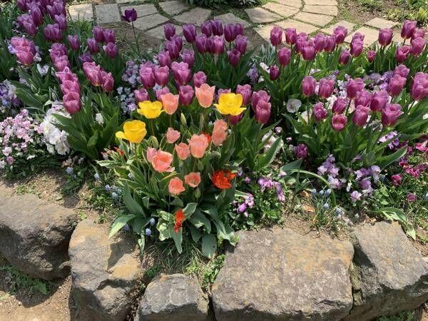 今、花好きの間で密かに流行中!『花壇ウォッチング』の魅力と楽しみ方。
