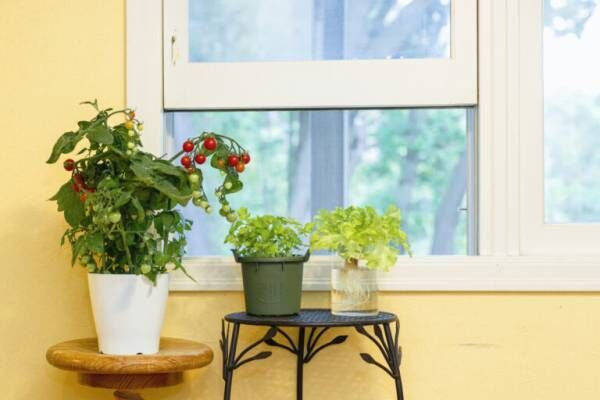 """初心者にもおすすめ!窓際でハーブや野菜を育てる""""コンパクト菜園""""のススメ。"""