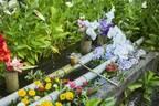 【京都】花手水(はなちょうず)が魅力的な寺社6選。花で作りあげる小さな美の世界へ。