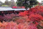 【秋の京都はここに決まり!】京都の紅葉名所と、おすすめグルメ店をご紹介