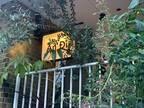 〈行ってみた〉五感総動員で挑むベトナム料理【AnDi(アンディ)】外苑前