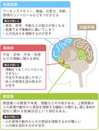 アスペルガー症候群(AS)の原因は?遺伝する確率はあるの?