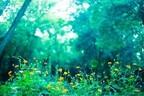 【五精音占い】「木精」パワーで良縁を引き寄せよう!