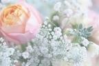 【七曜星風水】「金星メソッド」で華のある女性になろう!
