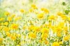【マヤ占い】黄色い種の13日間は、気付きの種を蒔き、育てよう!