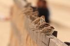 【夢占い】吉凶を占う!鳥にまつわる夢4つ