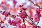 【五精音占い】恋愛成就を祈願する『立春縁結び』とは?
