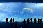 日本一の「美ら海水族館」は、沖縄旅行のマストなスポット!