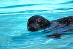 鴨川シーワールドで、特別な彼との思い出を。夏の水族館は一味違う!