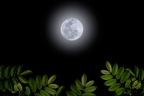 【七曜星風水】癒し&悩み解消には「月のパワー」を使おう