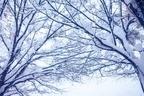 2015年の運気アップ!19年に1度の「朔旦冬至」を活用しよう