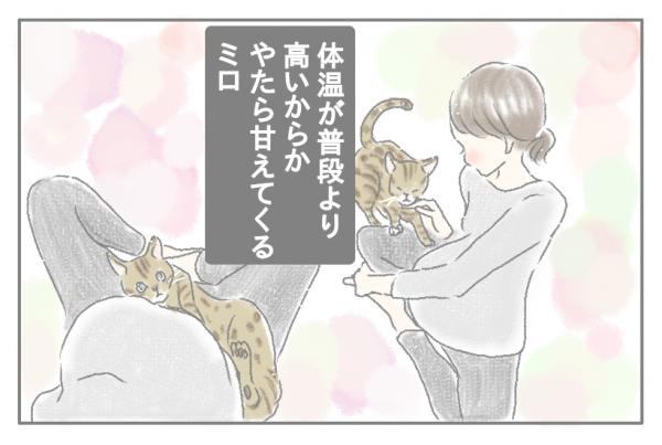 ワンオペ育児ママ・mitoのうーたろうとネコのいる生活  Vol.15 妊婦と3兄弟