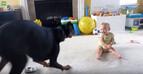 癒し効果バツグン!「赤ちゃんと動物のふれあい」にキュンキュン♪