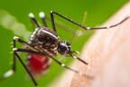 なんで私だけに!? 蚊に「刺されやすい人・刺されにくい人」その違いは?