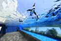 サンシャイン水族館リニューアルオープン! あの人気者が「都会の空」を泳ぐ!?
