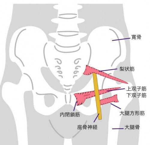 妊婦 足 の 付け根 痛み 【医師監修】妊娠超初期に脚(足)の付け根は痛くなる?