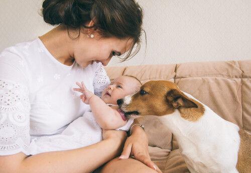 赤ちゃんと犬は一緒に暮らせる?飼う時の注意点とは