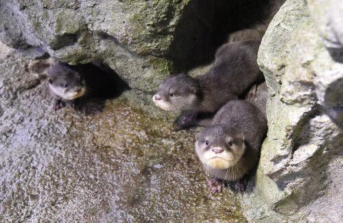 GWの子連れお出かけスポット紹介!「かわいい赤ちゃんが見られる」動物園・水族館5選