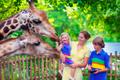 なんで行きたくなるの?動物園の魅力に迫ったランキング発表