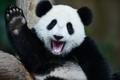 """かわいすぎ♡9月~パンダの""""特別な季節""""に突入するって知ってた?"""