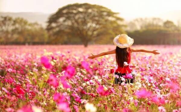100万本のコスモスが満開!桃色に染まったロマンチックなドイツの森【岡山県】