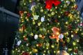 海の生き物でできたツリーが登場!クリスマスは海のイルミネーションで楽しもう
