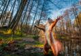 「ワォな生き物大募集」身近な自然でみつけた感動の写真とエピソードを募集