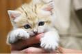 """かわいすぎる♡砂漠の天使!""""世界最小級の野生ネコ""""スナネコ写真集が楽しみすぎる"""