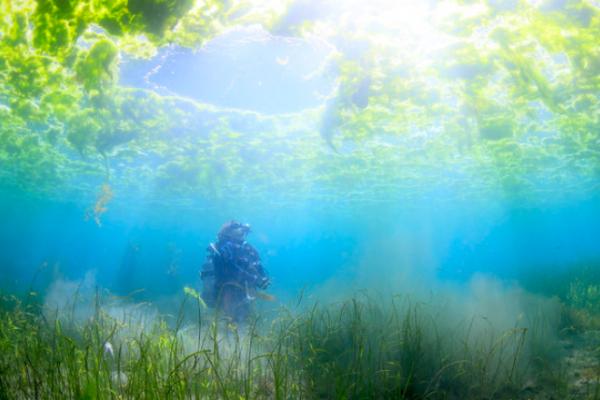 まだ知らない世界があった!5人の水中写真家による海から見たニッポンが美しすぎる