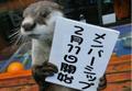 柵なし水族館⁉︎人気動物やスタッフが登場するオンライン配信サービス