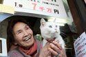 グリーンジャンボ10匹合わせて90億呼ぶリアル億招き猫たち