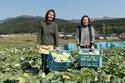 熊本地震から1年、夢追う農家姉妹「熊本野菜を世界に!」