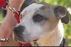 盗まれた介助犬、3年ぶりに故郷へ