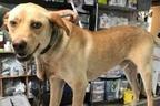 犬の首カラビナで痛めつけ…飼い主に約100万円の懸賞金