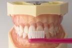 起床時に歯磨きを!口の中にうんこ10グラム分の細菌がいる