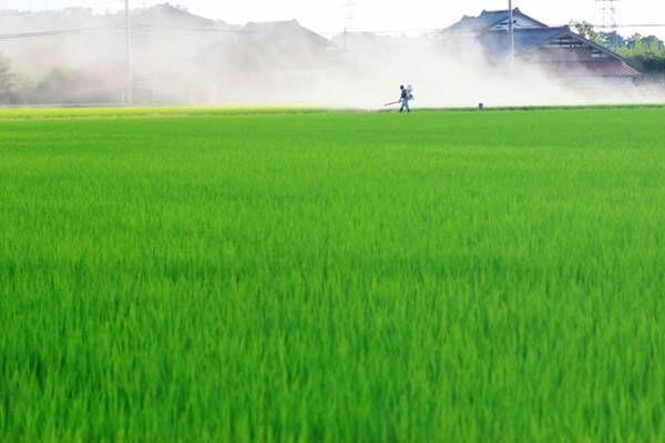 「発がん性」除草剤成分が大手3社の小麦粉に、欧州では規制も