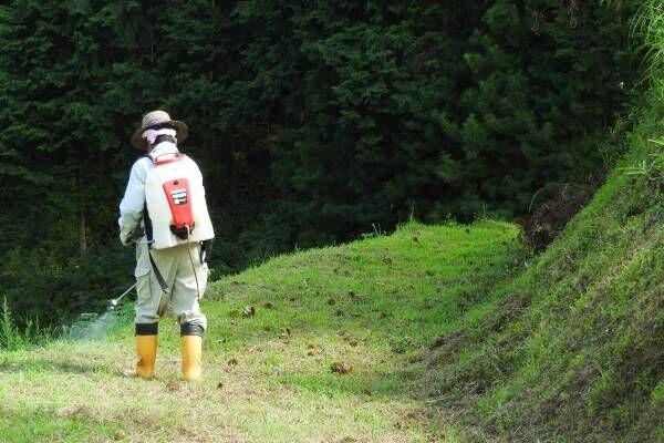 小麦粉、ワインから検出された除草剤成分、影響を専門家が警鐘