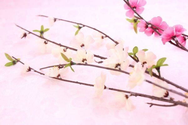 立春から幸運の1年をはじめるための「春財布」新調のススメ