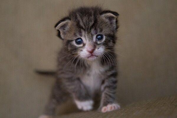 野良猫に噛まれた女性 病院で542万円を請求される事態に