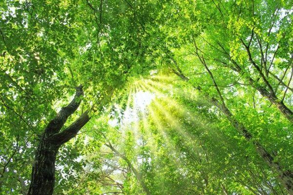 ストレス解消に効果!「樹木呼吸瞑想」でリラックスした時間を