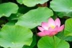 """人間関係の悩みに疲れたら口に出したい""""仏陀の言葉""""とは"""