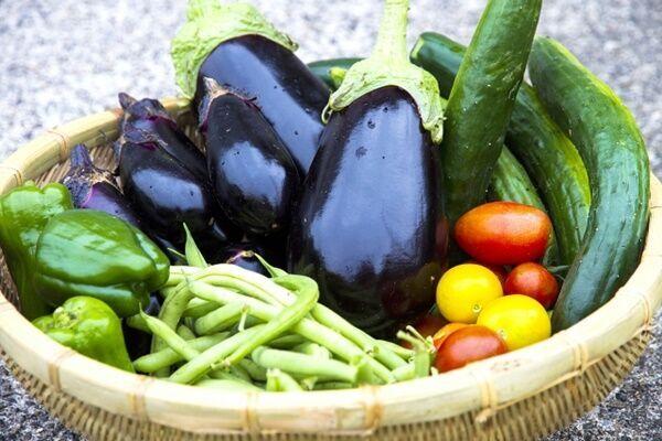 きゅうり、なすは2倍……野菜価格高騰は8月に入っても続く