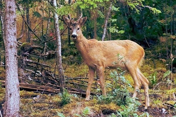 現場はシカの狩猟区域だった。