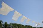 多すぎる洗剤が黄ばみの原因になる…お洗濯の新常識〇×クイズ