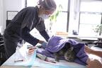 飼い猫2匹がCOVID-19陽性 ペットの感染は米で初