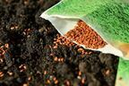 中国から米国に謎のタネ「絶対に蒔かないで」当局が警告