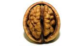 """湖のほとりに""""脳みそ""""が漂着か、SNSで憶測呼ぶ"""